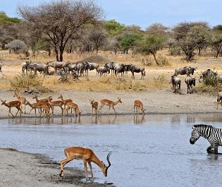 Getty Lake Manyara wildlife