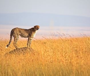 Getty Serengeti National Park