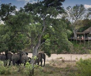 Tanda Tula Safari Camp
