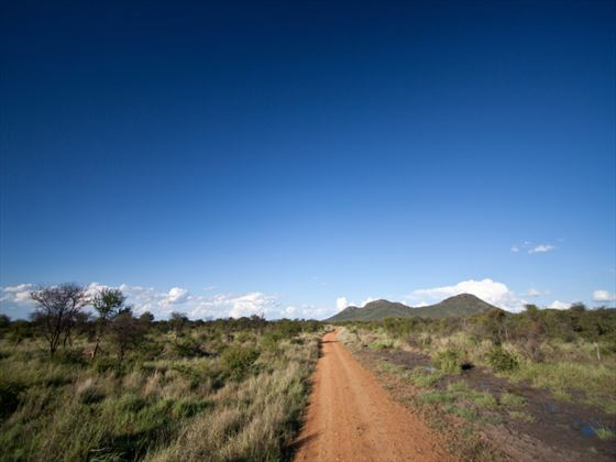 Dirt track in the African Bush, Madikwe Game Reserve