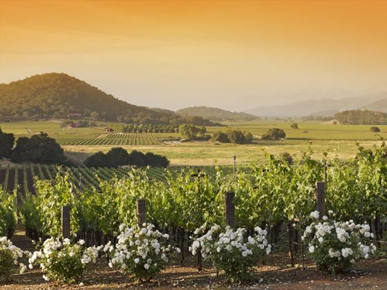 Napa Valley vineyard, California