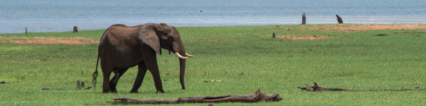 Elephant in Matusadona NP - getty