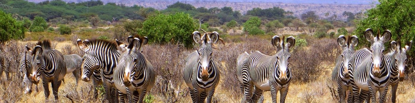 Elephant Watch Camp zebra in Samburu