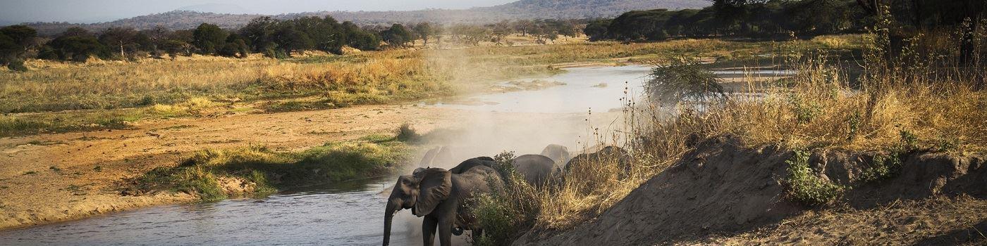 Kigelia Ruaha camp - elephant in Ruaha