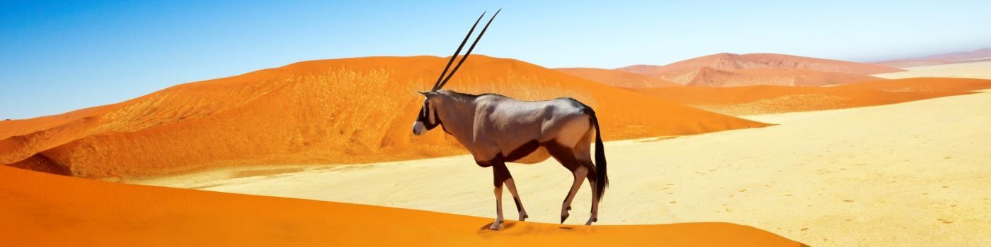 Getty oryx on sand dunes in Sossusvlei
