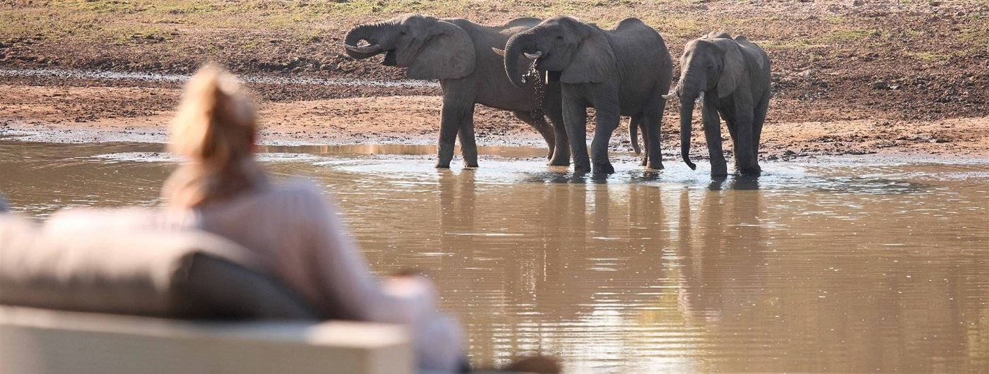 Chinzombo Camp watching elephants drink