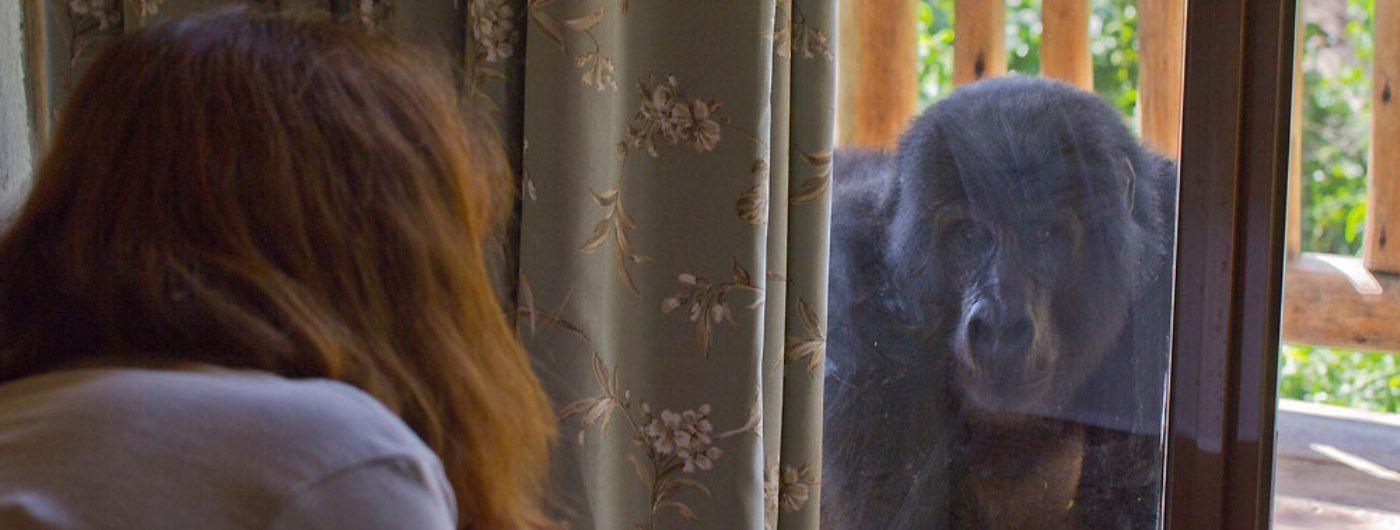 Gorilla by bedroom