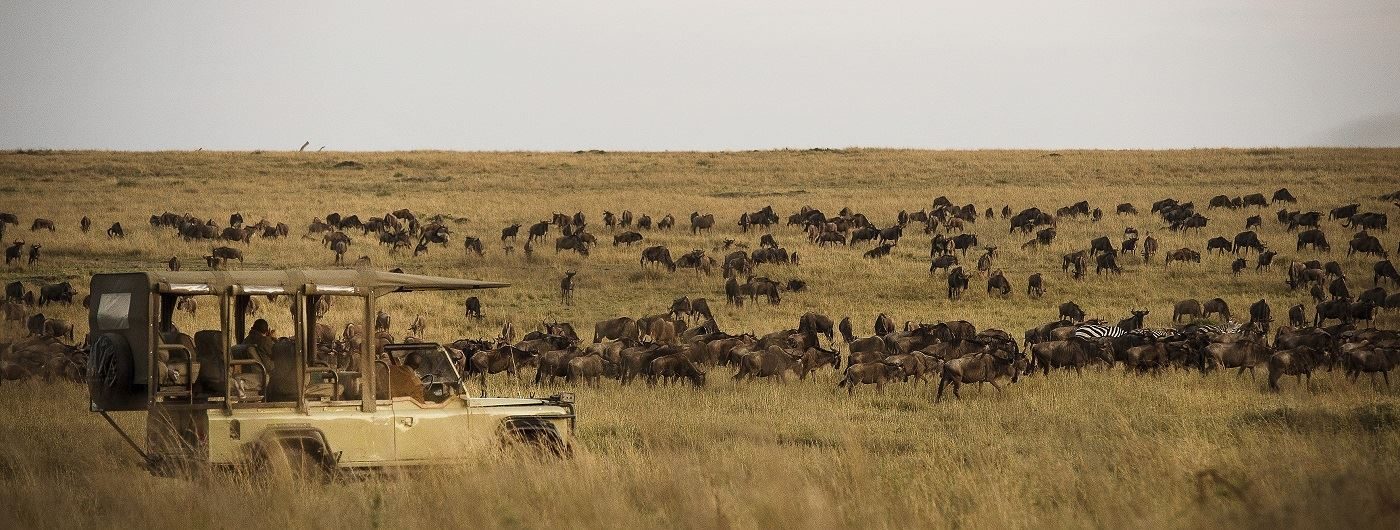 Wildebeest Migration - Eliza Deacon