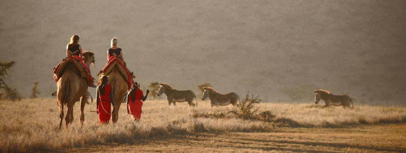 Camel safari