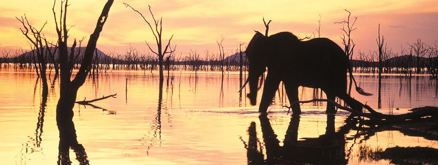 Musango Camp elephant in the sunset