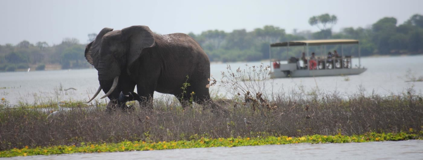 Siwandu elephant on water safari