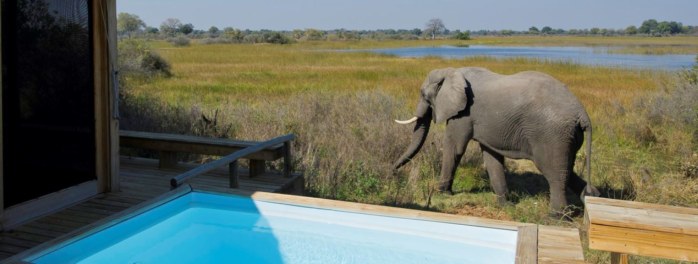 Vumbura Plains Camp elephant outside guest room