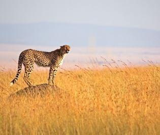 Getty Serengeti National Park