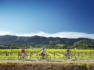 Cycling amongst the vineyards of Nelson