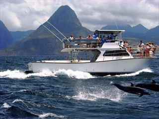 dolphin and whale watching st lucia excursion