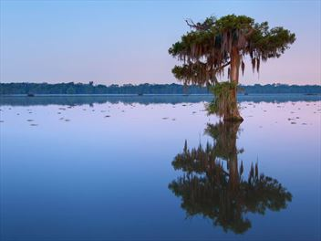 Experience a tour of Louisiana's swamps