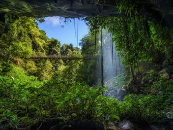 Exploring Australia's ancient rainforests