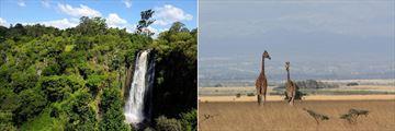 Thomson's Falls & Giraffes, Aberdare National Park