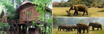 Accommodation & Elephant sightings, Elephant Nature Park