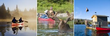 Activities & Wildlife Sightings, Algonquin
