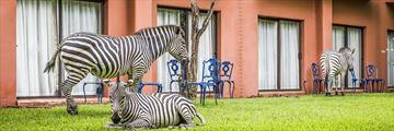 Avani Victoria Falls Resort, Zebras Grazing in Resort