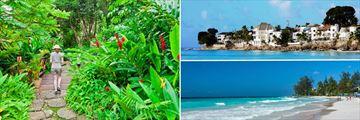 Andromeda Botantical Gardens, Barbados Caribbean Houses on the Beach, Accra Beach South Coast Barbados