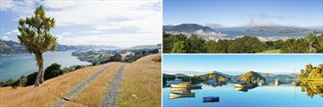 Beautiful Dunedin Coastal Scenery, South Island
