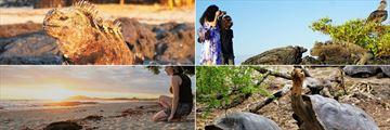 Beautiful wildlife watching in Galapagos