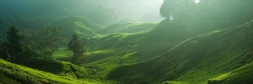 Luxury  Camerion Highlands Escapade; a view over the the Cameron Highlands