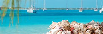 Conch chells on Exumas island