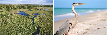 Florida's Everglades National Park & wildlife