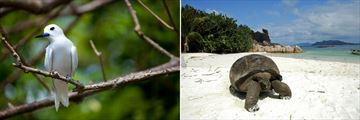 Seychelles Fairy Fern & Giant Tortoise