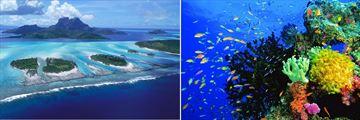 Fiji Islands & Coral Reef