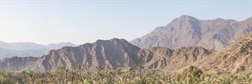 Mountains and palm trees in the Fujairah landscape