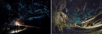 Glow Worm Cave Tour