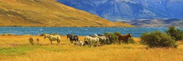 Horses in Torres del Paine National Park