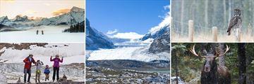Winter Experiences & Wildlife Sightings in Jasper