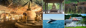 Jetwing Vil Uyana, Sigiriya, (clockwise from left): Dambulla Rock Temple, Anuradhapura Excursions, Elephant Gathering, Kandy Excursions and Whale Watching