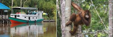 Kalimantan Orangutan River Cruise
