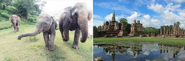 Rescued elephants in Lampang & Sukhothai landscapes