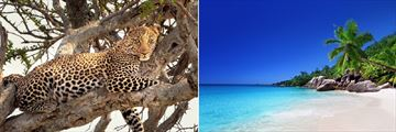 Leopard in Samburu National Park & a Praslin Island beach in the Seychelles