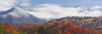 Light Snowfall in The Great Smoky Mountains Tennessee