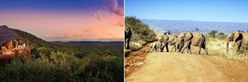 Madikwe Safari Lodge & Elephants crossing track