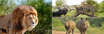 Lion in the Mpumalanga Province and Wildlife in Kruger National Park