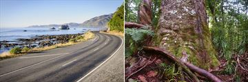 Coastal Drive & Kauri Trees in the Waipoua Forest, New Zealand