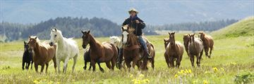 Herding the horses in the American Rockies prairies