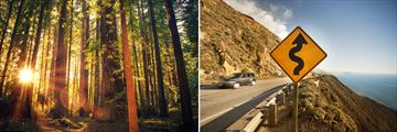 Redwood National Park & Coastal Roads in California