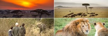 Serengeti landscapes & wildlife