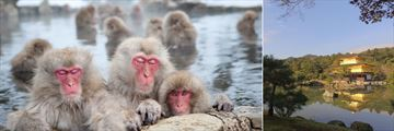 Snow monkeys of Jigokudani (left), and Kyoto's Golden Pavilion (right)