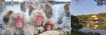 Snow monkeys of Jigokudani (left), and Kyoto's Golden Pavilion (right)